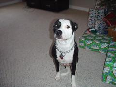 Dec 2008 058 (all.momsboys) Tags: dec2008