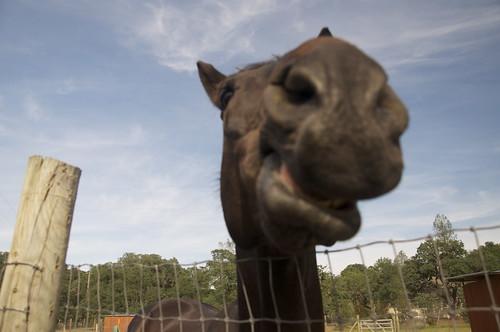 Haaaaayyyy! Horse-O-Rama was FUN!