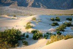 Death Valley National Park-449
