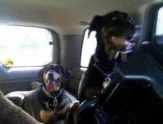 Dogs_Home_52609b