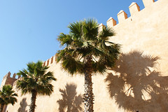 Medina Walls (pietroizzo) Tags: trees palm morocco maroc medina walls rabat