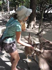 Lick (digibron) Tags: holiday portdouglas kangaroos bron