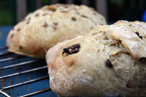 Rosemary-Thyme and Chocolate Chip Breads + Giveaway! 1