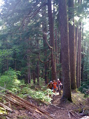 TNABers pounding out some steep trail through a grove of huge Hemlocks