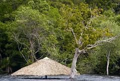 Muita água... (Luiz C. Salama) Tags: brazil rio brasil river environment manaus cheia amazonas amazonia rionegro meioambiente