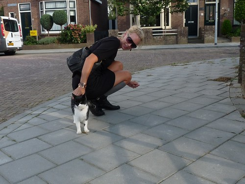 holland blog cat