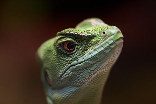 フリー写真素材, 動物, 爬虫類, トカゲ,