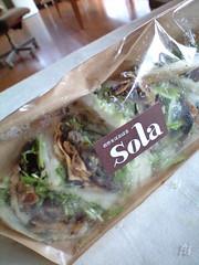 香草とゆずこしょうの豆腐ハンバーグサンド@Sola