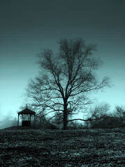 One's Dream - Blues (Ekler) Tags: blue winter light bw white black tree nature field grass fog mystery dark season landscape photo lyrics flora branch dusk foggy picture blues ground pic enigma explore bobdylan mysterious monday whell evolt ekler oldschooldigital aplusphoto olympuse410 soloha dreaminofyou forbluemonday