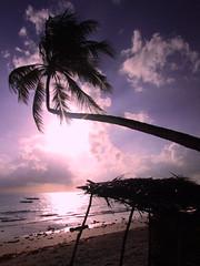 "Zanzibar Kiwengwa spiaggia (micio.macho) Tags: africa sea people beach animals fruit palms children tanzania boat sand barca mare fishermen turtle bambini tide objects villages palm persone wharf mara beaches monkeys zanzibar muslims palma frutta palme masai spiaggia animali tides citta maree sabbia pontile marea spiagge pescatori jozani scimmie villaggi musulmani town"" kiwengwa ""stone tartarugha ""ngoro ngoro"""