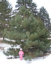 Olivia By Big Pine Tree