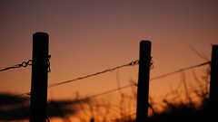 Sorrow (_David_Meister_) Tags: silhouette landscape colours sonnenuntergang sundown wine landschaft farbe grapevine wein amok weinrebe 110309 davidmeister