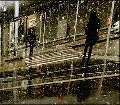 Spring (Regina J.) Tags: vienna wien street snow trafficlights geotagged austria österreich spring crossing pentax candid signals zebra crosswalk candids crazyweather nospring justpentax pentaxk20d geo:lat=48257413 geo:lon=16448939