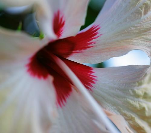 Flor Blanco y Rojo