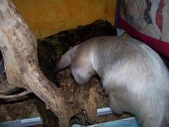 Pua gets a fresh log