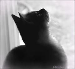 Curiosity (Jersey Rich) Tags: cats nikon kitten ourtime ineffable d80 dragondaggerphoto