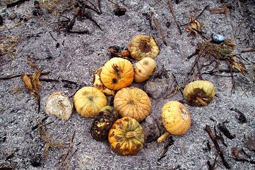 pumpkin-jerica