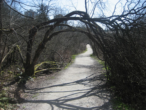 Bendy tree - slash - archway
