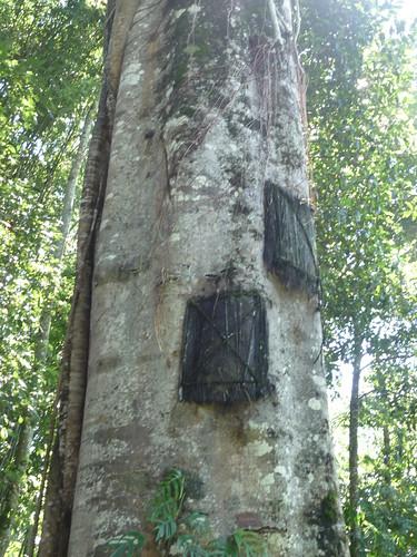 Pays Toraja Visite 3 (30)