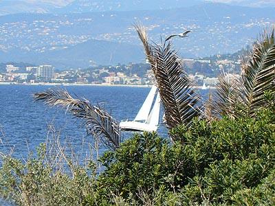 bateau, mouette et palmier.jpg
