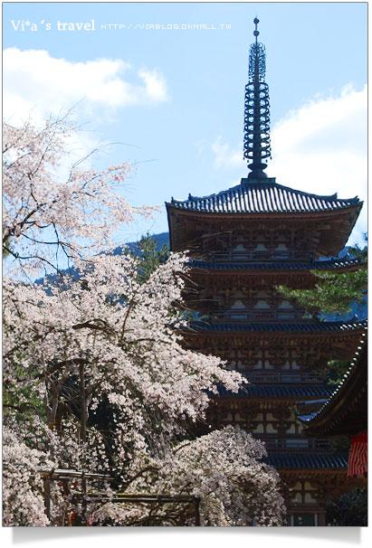 【日本關西賞櫻】京都賞櫻必去~醍醐寺之西大門寺區