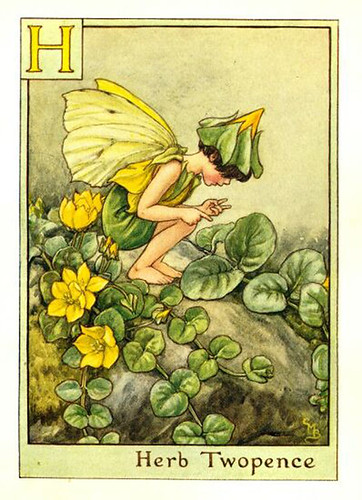 023-herb_twopence_flower_fairy