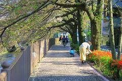 町田樹 画像63