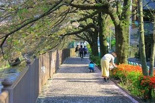 町田樹 画像59