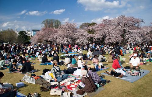 El hanami en Shinjuku Gyoen. Sakura (y 6)