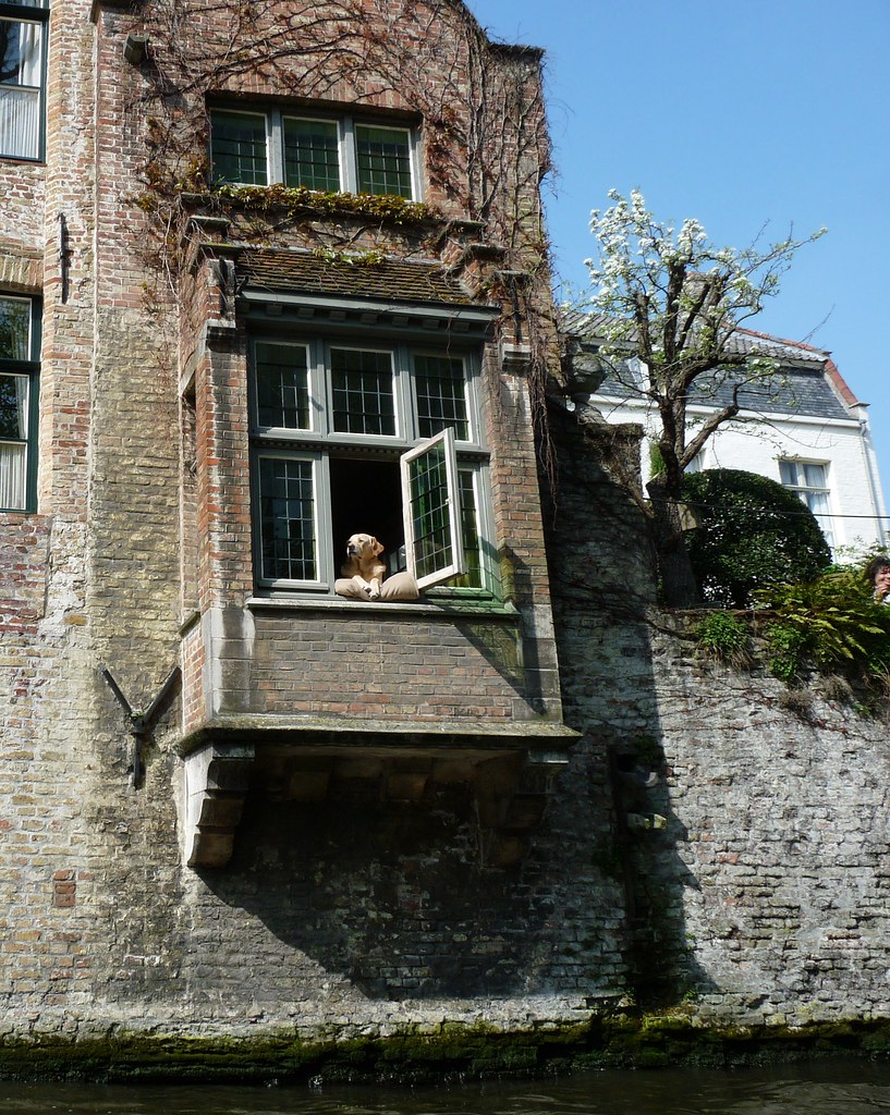 """The boat guide said """"This is the most photographed dog in Bruges!"""""""