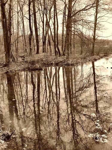 sepia swamp