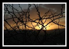 Atardecer Atrapado en Espinas (Carlos Guardado) Tags: chihuahua canon contraluz mexico atardecer flora carlos puestadesol 2009 guardado arbustos carlosguardado