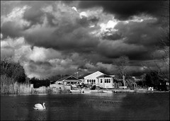 Mono Thames (Studyjunkie) Tags: uk greatbritain england bw clouds landscape mono blackwhite swan britain surrey gb riverthames walton weybridge approachingstorm riverscape desboroughisland