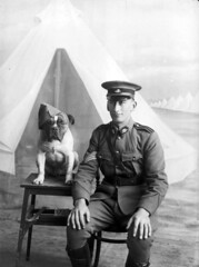 Staff Sergeant Major Morgan and dog, 1915 (Australian War Memorial collection) Tags: portrait dog pet man male animal mammal soldier person major tents chair uniform australia melbourne victoria tent bulldog mascot cap soldiers ww1 morgan stool 1915 firstworldwar armycamp sergeant canis australianwarmemorial staffsergeant broadmeadows foragecap commons:event=commonground2009 gabrielalbertmorgan militiauniform