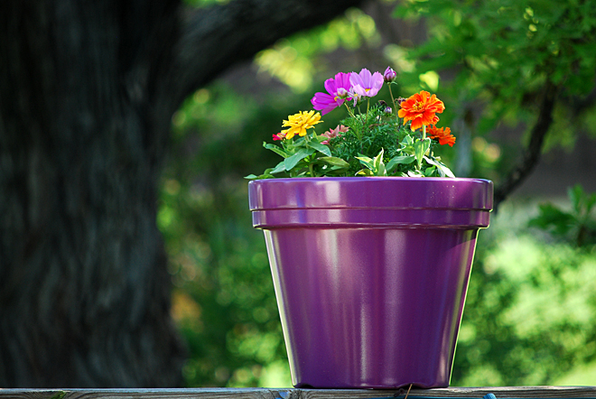 A purple pot of potted plants placed precariously on its perch (with bits of bokeh)