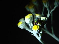 Red Eye (Jenn (ovaunda)) Tags: black yellow blackbackground night dark lowlight sony onblack dsch5 jennovaunda ovaunda