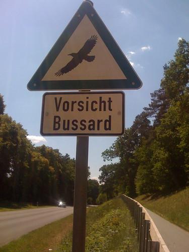 Buzzard Attack