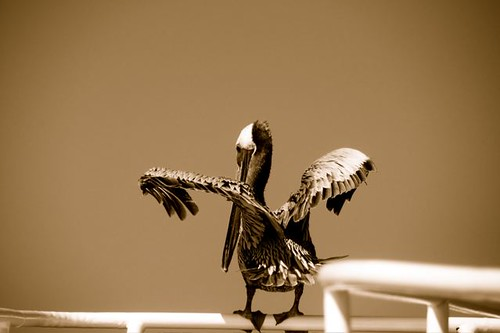 Pelican Anacortes, WA