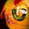 ~ Wet Day ~ (ViaMoi) Tags: canada color colour macro nature beautiful rain weather closeup bronze digital canon 50mm photo drops close natural ottawa drop canadian refraction bloom lightning 90mm farbe 2009 depth naturalist naturesfinest blueribbonwinner digitalcameraclub macroextreme inspiredbylove flickrsbest golddragon 40d abigfave mywinnertrophy anawesomeshot colorphotoaward aplusphoto diamondclassphotographer flickrdiamond citrit theunforgettablepictures canon40d naturewatcher excapture betterthangood macrolife theperfectphotographer viamoi goldstaraward natureselegantshots damniwishidtakenthat flickrlovers grouptripod saariysqualitypictures