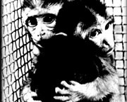 Kinship Circle - 2009-06-29 - Updates, April-June 2009 - 08 Primate Vivisection