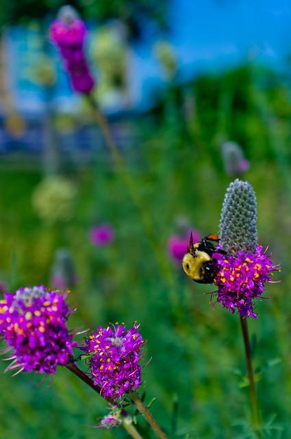 166/365 - June 15, 2011 - Pollination
