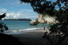 Cathedral Cove, Coromandel, NZ (skiwiman) Tags: blue trees shadow sea newzealand sky cloud sun tree tourism beach water beautiful sunshine clouds island bay coast countryside sand waves cathedral cove branches sunny spray nz northisland kiwi twisted coromandel