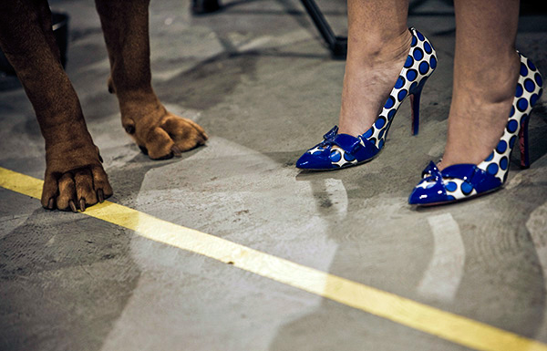 11-22_001 Purina Dog Show Philadelphia