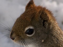 Is my eye liner ok ? (Lily C.) Tags: snow squirrel lilyc qureil