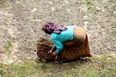 Fertilizer (Richard Friedericks) Tags: nepal annapurna gurung hkis gandrung