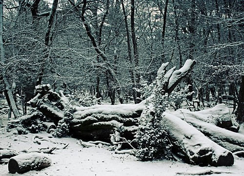 Ytene in snow 1
