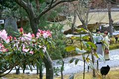 Flowers and kimonos (Sunny T.) Tags: trip lake tower japan tokyo spider kyoto view sprite coke spoon totoro sakura roppongi lantern enoshima buddah viaggio ema giappone cervi grattacieli