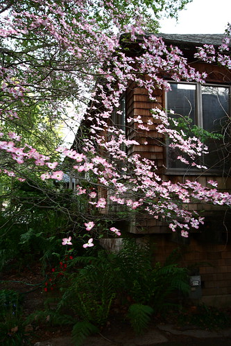Hi, my names Kari, and Im addicted to dogwood trees. Theyre just so stinking pretty...