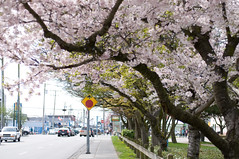 last chance for the blossoms (chrisliang82) Tags: nikkor50mmf14d d90