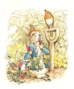 Top 100 Picture Books #19: The Tale of Peter Rabbit by Beatrix Potter